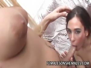 transsexual beauty queens torrent